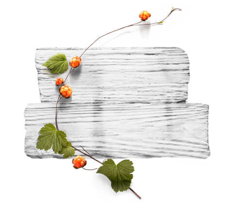 barnangen_ch_products_nordic_care_range_ingredients_cloudberry_480x430